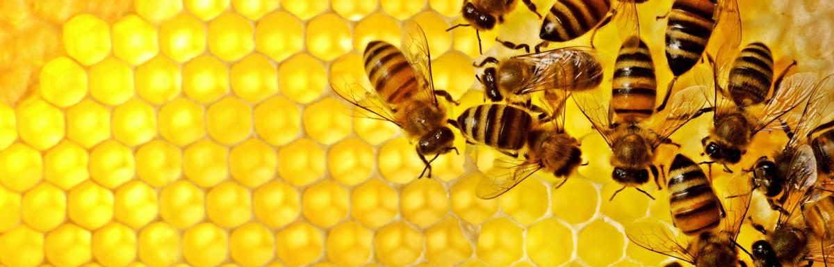 Obiteljsko pčelarstvo Knežević - slide1