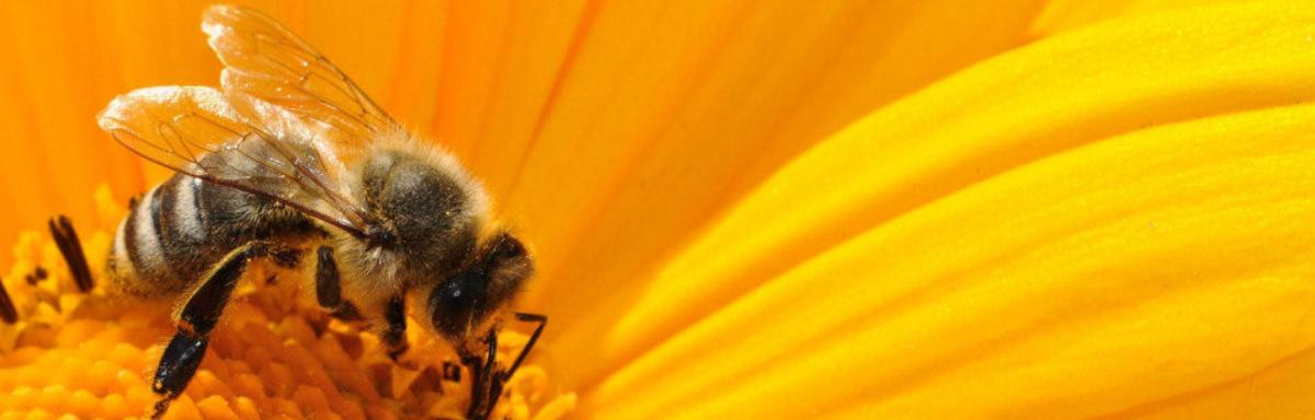Obiteljsko pčelarstvo Knežević - slide2