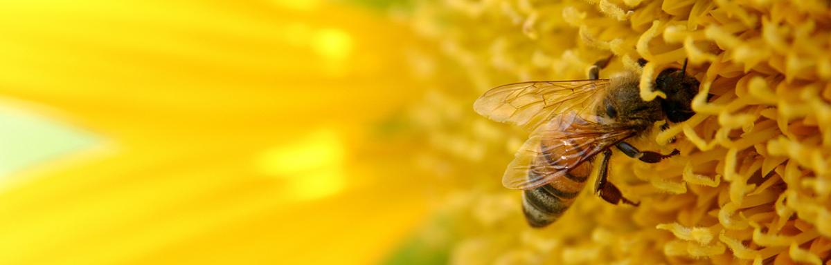 Obiteljsko pčelarstvo Knežević - slide3